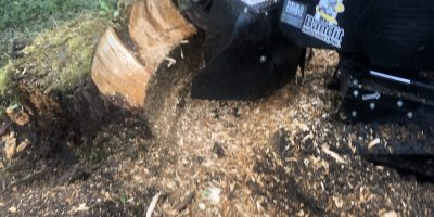Edinburgh Stump Grinding